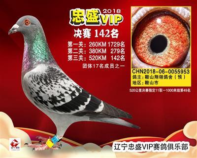 VIP953