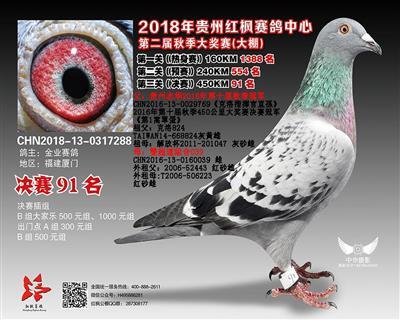 2018贵州红枫赛鸽中心91名