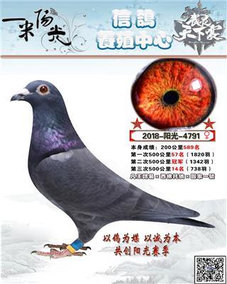 阳光791-冠军已售西宁