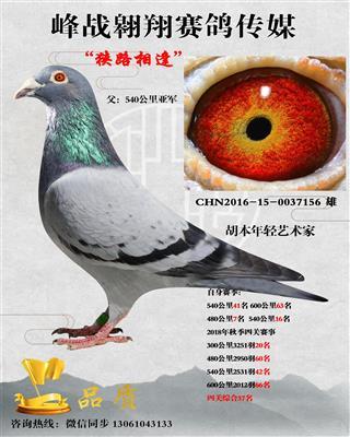 """""""狭路相逢""""四关鸽王"""
