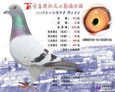 青岛同仁天工公棚 410 名(已转让)