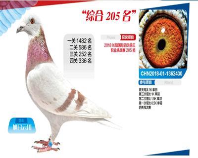 长阳国际205名