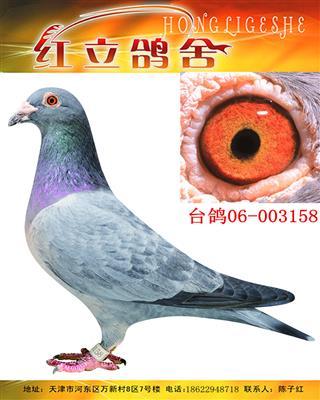 台湾硕圆鸽舍(詹森)