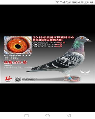 龙鑫153