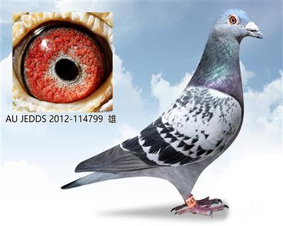 劳伦斯雪鸟114799【已售出】
