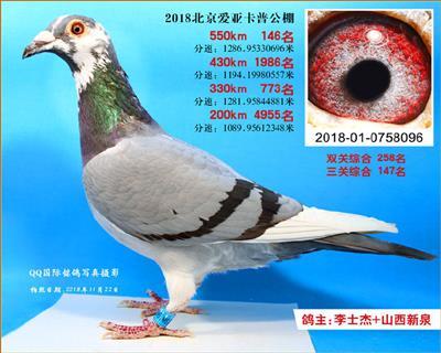 2018年北京爱亚卡普决赛146名