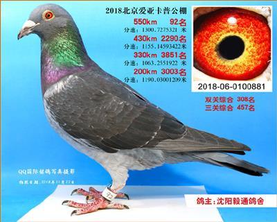 2018年北京爱亚卡