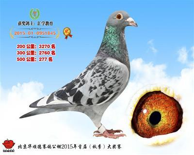 华顺德决赛277名(已转让)