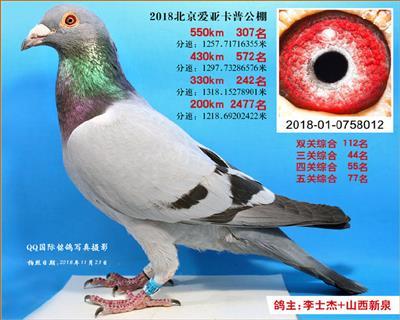 2018年北京爱亚卡普公棚决赛307名