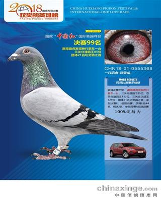 北京惠翔公棚成绩鸽