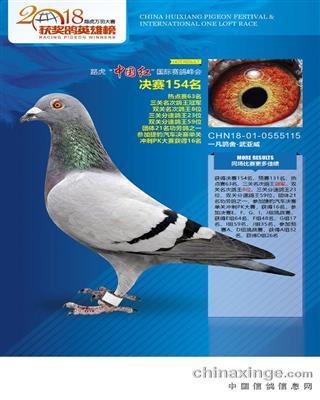 北京惠翔公棚三关鸽王冠军