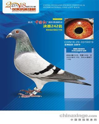 CHN18-29-0016819