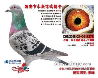 瑞威377(未央5关综合34名)