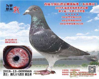 郭氏天马868