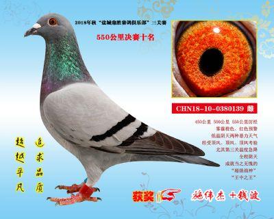 CHN18-10-0380139