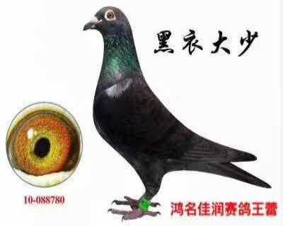 台湾培英黑衣大少
