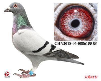 CHN2018-06-0886155