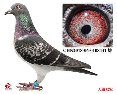 CHN2018-06-0108441