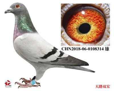 CHN2018-06-0108314