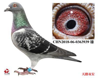 CHN2018-06-0363939