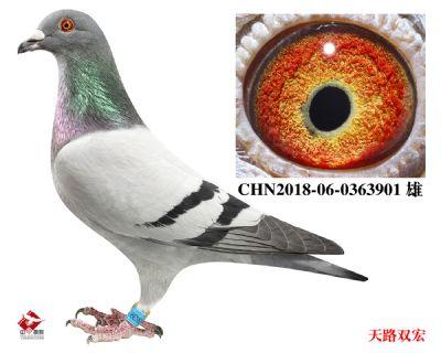 CHN2018-06-0363901