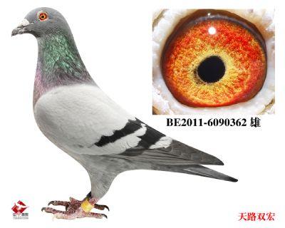 BE2011-6090362