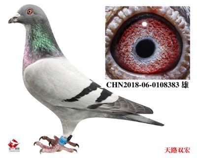 CHN2018-06-0108383