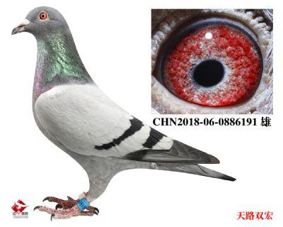 CHN2018-06-0886191