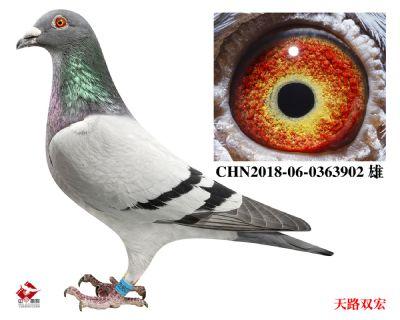 CHN2018-06-0363902