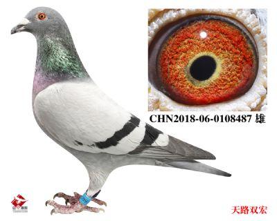 CHN2018-06-0108487
