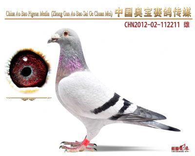 赛绩鸽112211