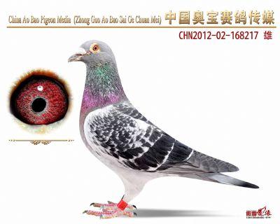 赛绩鸽168217