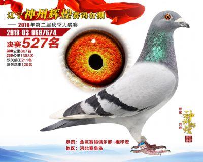 神州辉煌527