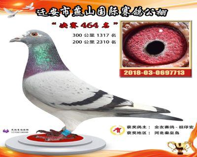 燕山奖鸽2