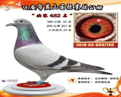 燕山奖鸽3