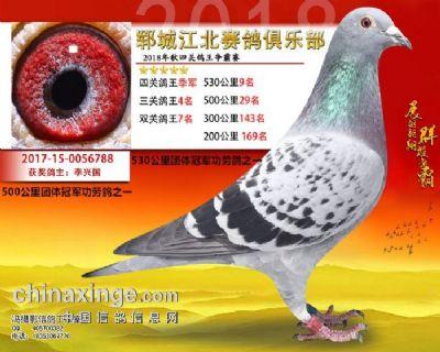 四关鸽王季军