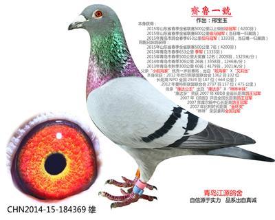 齐鲁1号山东省总冠军