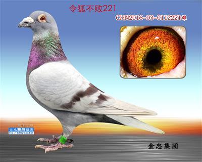 令狐不败221