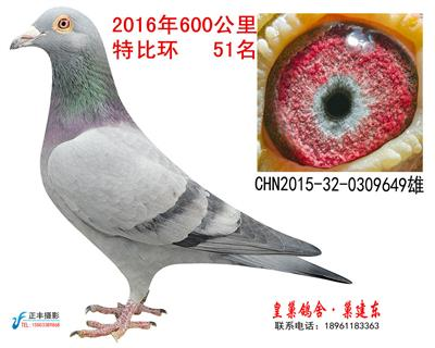 2016年获奖鸽