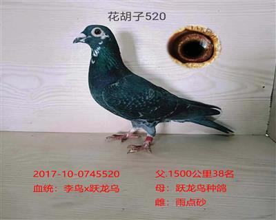花胡子520