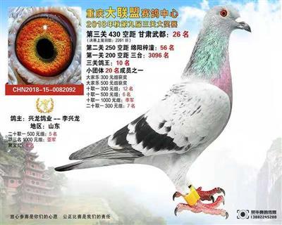 重庆大联盟鸽王十位