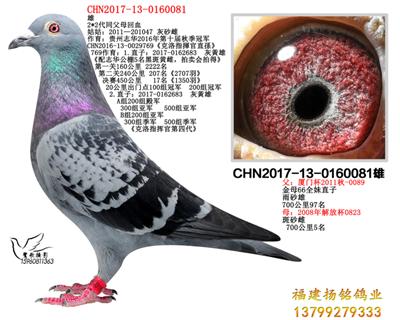 CHN2017-13-0160081