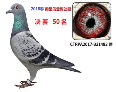 2018春 秦皇岛云翼公棚 决赛50位
