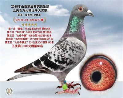 2018年凯旋赛鸽俱乐部五关鸽王68名