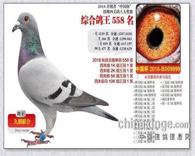 开创者中国杯铁鹰四关大奖赛558名