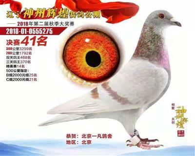 辽宁神州辉煌成绩鸽