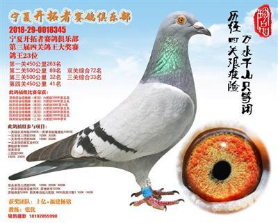 宁夏开拓者赛鸽俱乐部第三届四关鸽王23位
