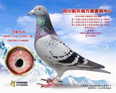 2018秋四川航天城公棚决赛192名