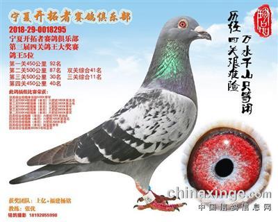 宁夏开拓者赛鸽俱乐部 第三届四关鸽王5位