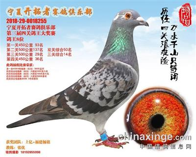 宁夏开拓者赛鸽俱乐部第三届四关鸽王8位